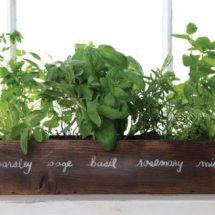 plants box1