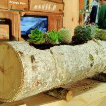 vaso-tronco